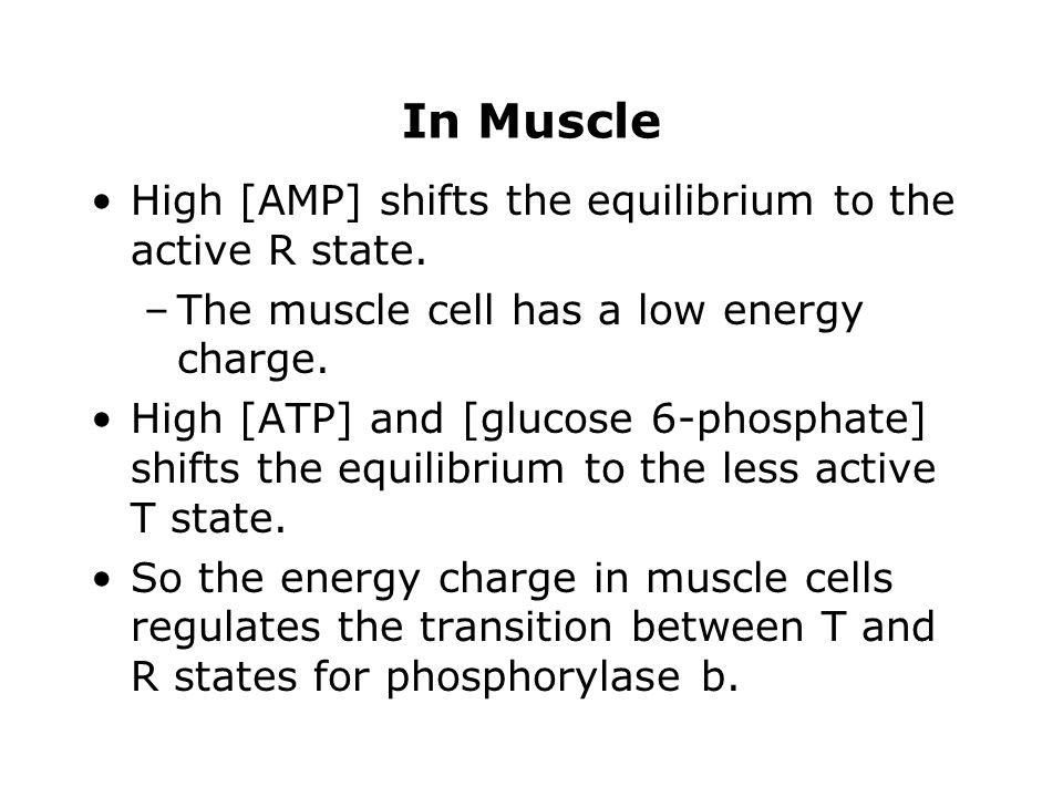 In Muscle High [AMP] shifts the equilibrium to the active R state.